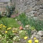 Garden KatieOConnors Hostel